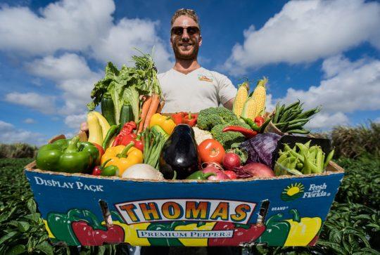 mgm-open-fresh-produce-box